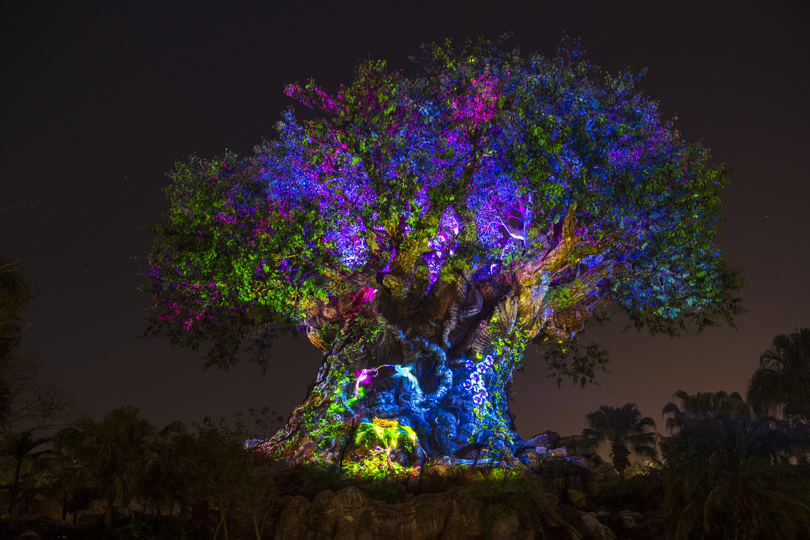 Disney's Animal Kingdom Nightlife