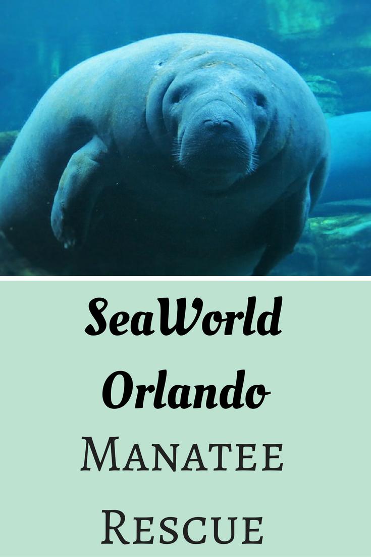Seaworld Orlando Manatee Rescue